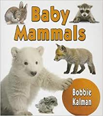 Baby Mammals: It's Fun to Learn About Baby Animals