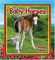 Baby Horses: It's Fun to Learn About Baby Animals