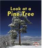 Look at a Pine Tree: Look at Trees (First Step)