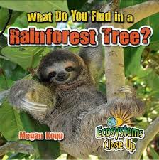 Ecosystems Close Up: What Do You Find In A Rainforest Tree