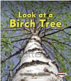 Look at a Birch Tree: Look at Trees (First Step)